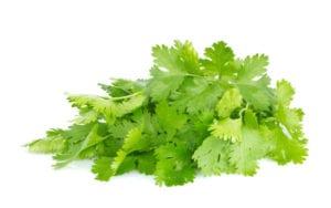cilantro decrease bloating