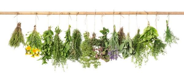 herbs to decrease bloating
